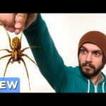 The Scary Spider Search – Good Mythical Crew Ep. 12