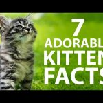 7 Adorable Kitten Facts