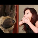 A Girl Obsessed With Sloths Gets Surprised With A Sloth