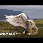 Animality Contest – Ugenteraan Manogaran | CreativeStation