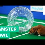 Hamsters Playing Football
