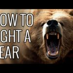 How To Fight A Bear – EPIC HOW TO