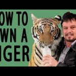 How to Own a Tiger – EPIC HOW TO