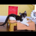 Kittens Recreate Thanksgiving Day Traditions