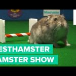 The Westhamster Hamster Show is Here and it's Hoppin'