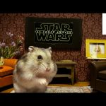 Tiny Dwarf Hamster Watches Star Wars for the First Time