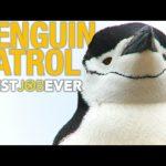 Tagging Adorable, Nasty Little Penguins: #bestjobever
