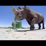 GoPro BTS: The Last of the Rhinos – Inside the VR Shoot