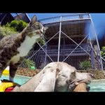 GoPro: Didga the Dog-Surfing Cat
