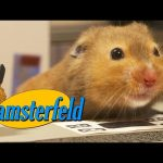 Hamsterfeld – 'Seinfeld' with Hamsters