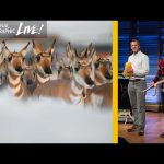 Photographing Animal Migrations, the Heartbeat of Yellowstone   Nat Geo Live