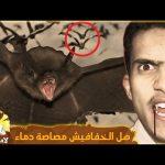 #لادودا_متاتا   خفافيش عملاقة في السعودية – Giant bats😱!! مع فهد التمساح