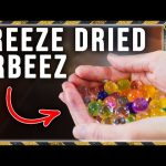 What Happens to Orbeez in a Freeze Dryer?